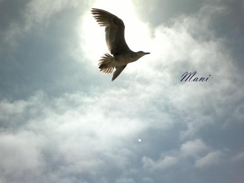 The Flight.....