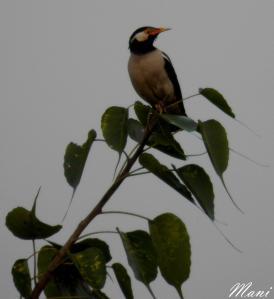 The little birdie