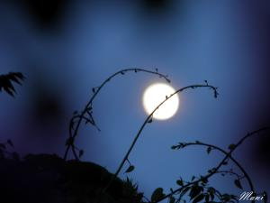 The Moon Rakhi....