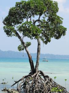 Beautiful Andaman 3